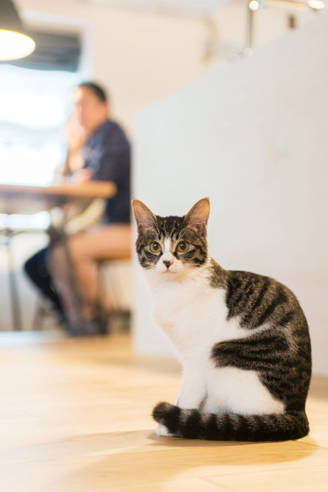 大倉山リノベーション事例と猫
