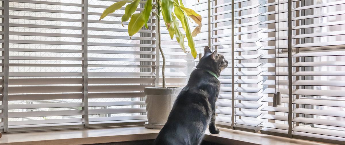 早稲田の中古マンションのリノベーション後のリビングの猫