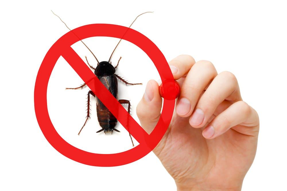 ゴキブリはマンションの何階から出やすくなる?条件や対処法を解説