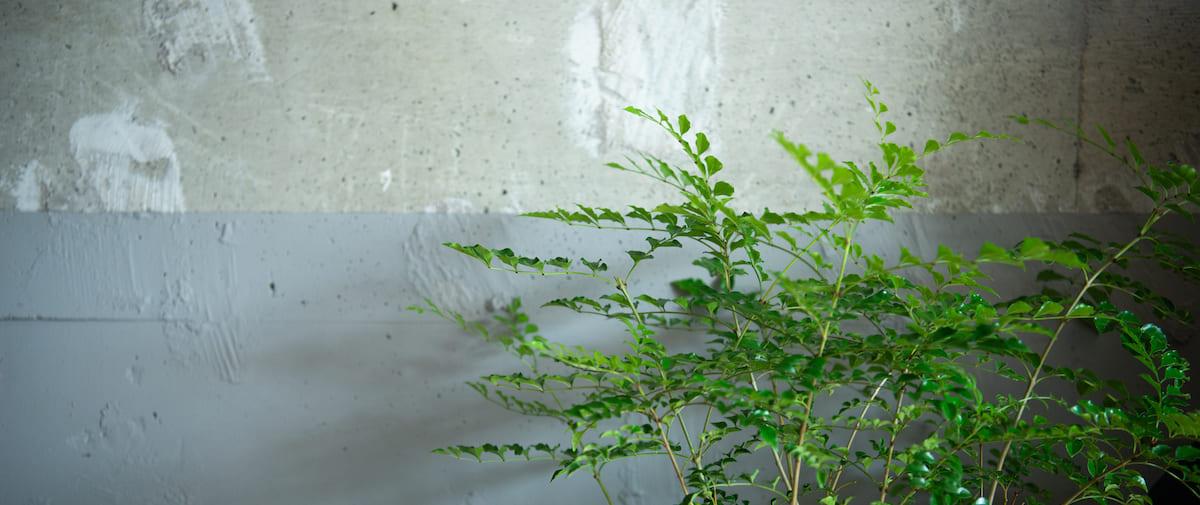 目黒の中古マンションのリノベーション後のダイニングの観葉植物